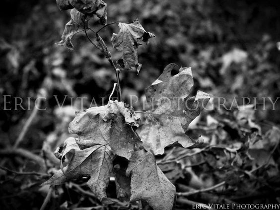 http://www.facebook.com/pages/Eric-Vitale-Photography/134673929969809?ref=ts