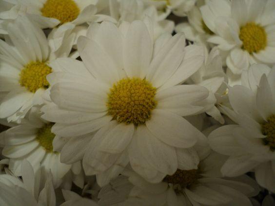 Há flores em tudo que eu vejo <3<3<3