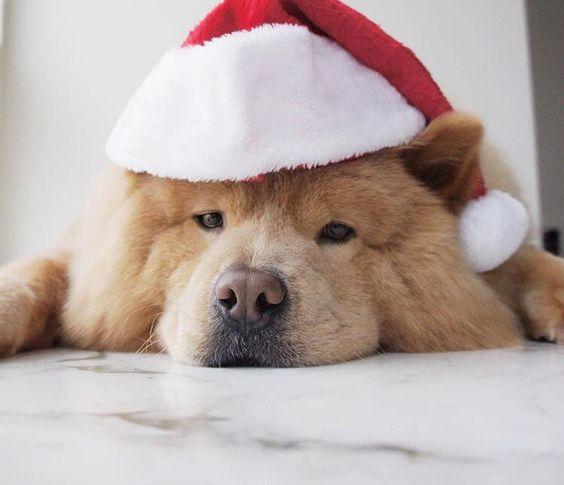 Buenas noches   #PetsWorldMagazine #RevistaDeMascotas #Panama #Mascotas #MascotasPanama #MascotasPty #PetsMagazine #MascotasAdorables #Perros #PerrosPty #PerrosPanama #Pets #PetsLovers #Dogs #DogLovers #DogOfTheDay #PicOfTheDay #Cute #SuperTiernos