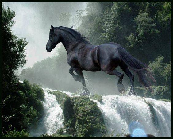 #horse #black #tiempocompartido #animal #nature http://www.cancelartiemposcompartidos.com/blog/45-soluciones-donar-rentar-vender-o-cancelar-mi-tiempo-compartido/