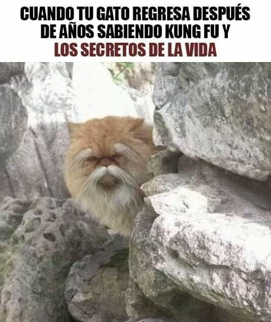 Los Mejores Memes De Gatos Memes En Espanol La Mejor Recopilacion De Memes Lo Mas Viral De Internet Meme Gato Memes Mejores Memes