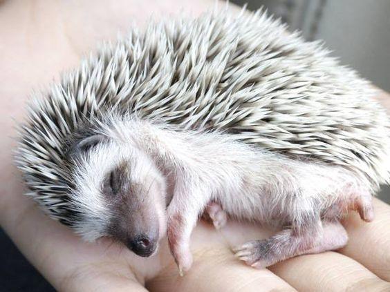 Sleeping Beauty !:
