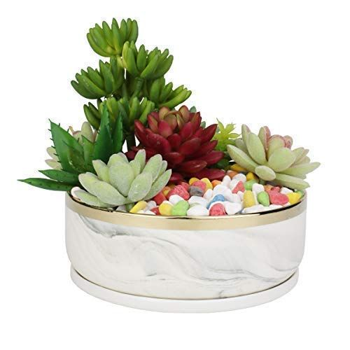 Cactus Bowl Planter Pot