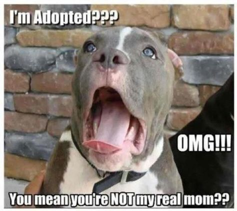 I'm adopted funny cute memes animals dogs dog animal meme lol humor funny animals funny pets funny animal: