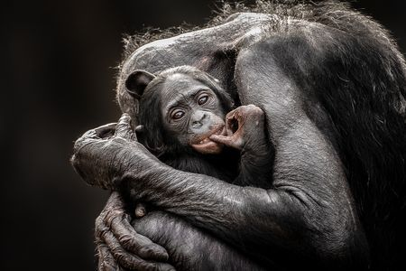 One Mothers Love Photo by Graham McGeorge -- National Geographic Your Shot