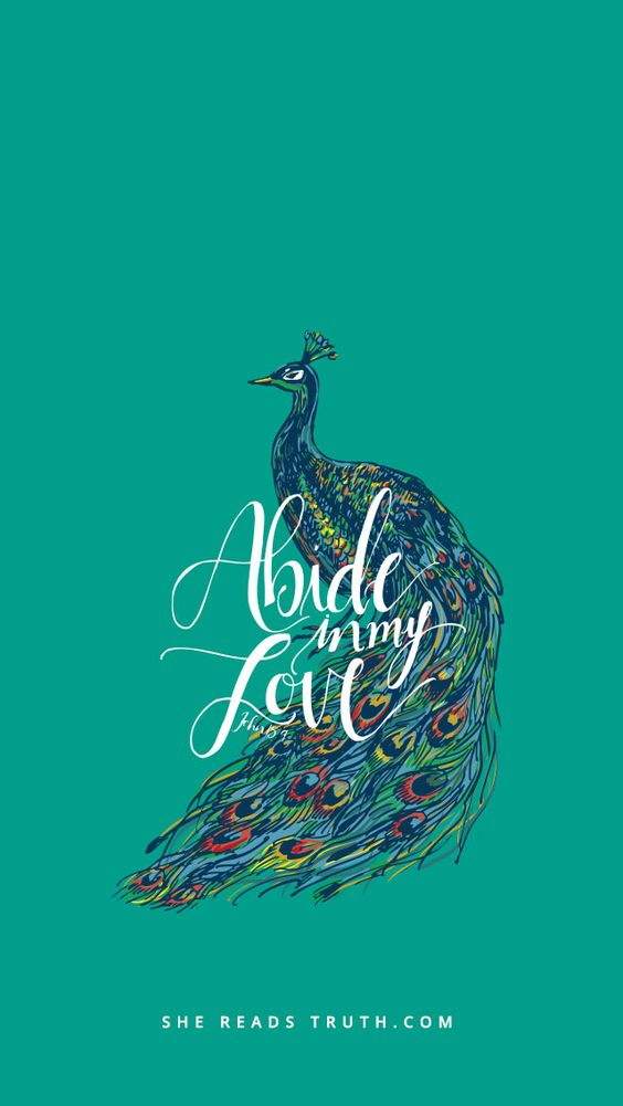 Image result for abide in my love wallpaper