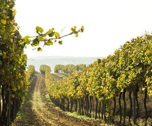 Chardonnay Alte Reben, 2011, Frank Das #Weinviertel kann auch #Chardonnay. Und unsere Verkosterrunde macht große #Augen. http://www.dieweinpresse.at/chardonnay-alte-reben-2011-frank/
