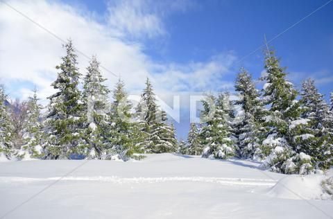 Beautiful Winter Mountainside Landscape With Snow Covered Pine Trees And Nice Stock Photos Ad Landscape Snow Mountainside Beaut Photo Landscape Stock Images