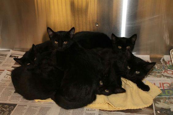 6 black beauties