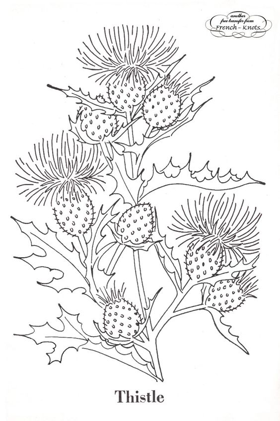 Thistle, goldenrod and poppies patterns FREE. (French knots):