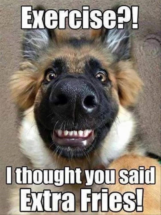 25 Goofy Memes Of German Shepherds That Will Make You Laugh All Day Animal Jokes Dog Jokes Funny Animal Memes
