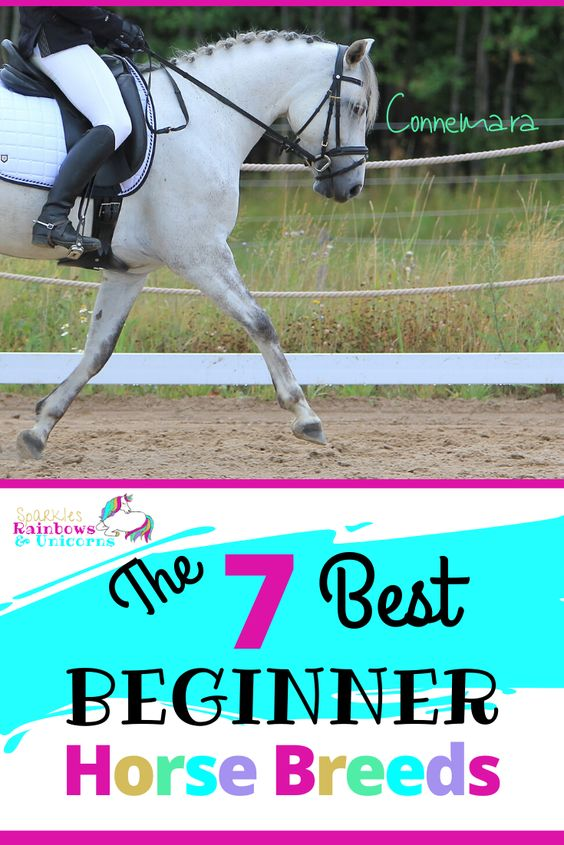 These are breeds that typically have the traits to be great for beginner riders. Although breed alone should not define whether a horse is suited for a beginner rider because there are exceptions to all breeds. I have chosen these breeds based the typical characteristics which are beneficial toward more novice riders. #bestbeginnerhorses #besthorsebreedsforbeginners #beginnerhorsebreeds #beginnerhorserider