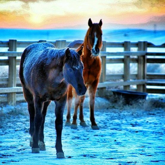 Photo of two horses in Colorado.. how beautiful!!! Photo by Lucas Snider