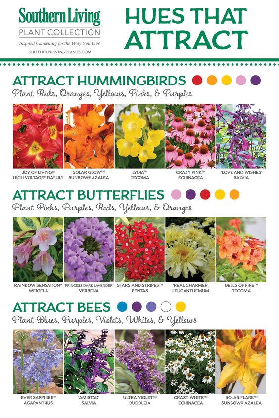 BIRDS, BEES AND BUTTERFLIES, OH MY! Attracting Pollinators to the Garden.: