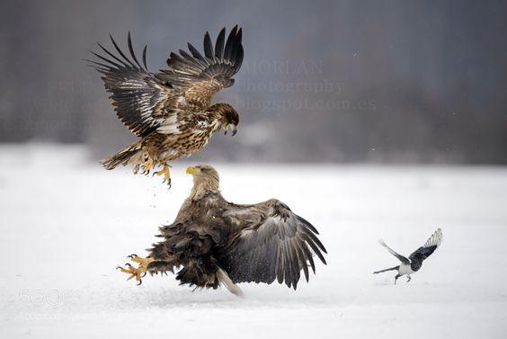 Supremacy by fx13spain via http://ift.tt/2atfckd