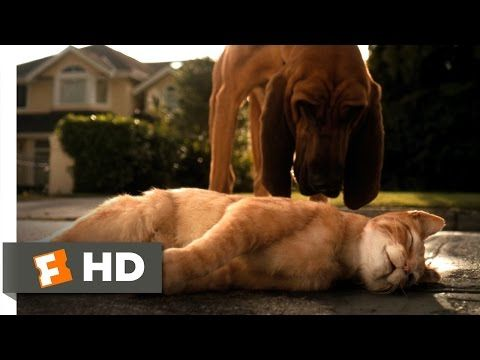 Cats Dogs 1 10 Movie Clip Catnapped 2001 Hd Youtube With Images Dog Movies Cat Nap Dog Cat