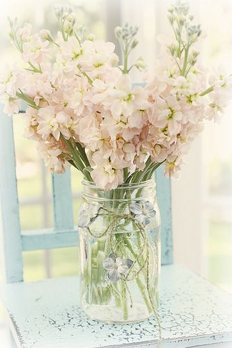 Pale pink stock -                                             also in lavender or white;                              lovely fragrance & make a wonderful         addition to a bouquet or an arrangement