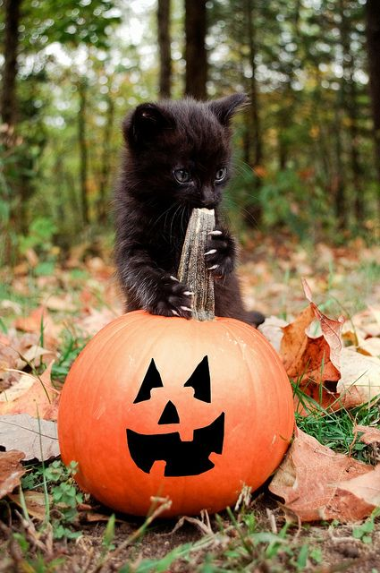 Black cats and punkins is vewy scawy...lol: