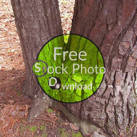 Download Free Photo - Two Stump - Trees and TrunksFree and Public Domain Stock Photo Download