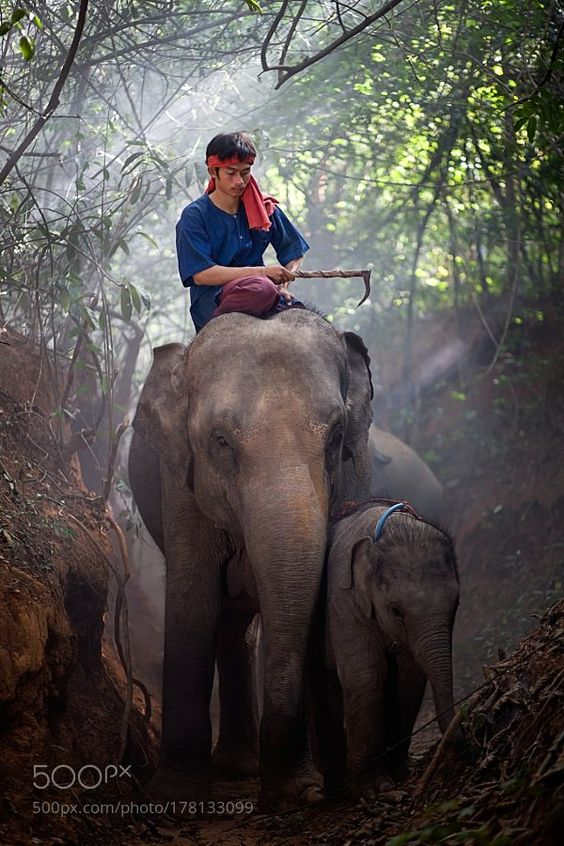 Popular #Photo #Journalism on #500px : Mahout sitting on an elephant's back and baby. by Pitakchatr #photography https://t.co/wgM4BN1IR9 # #photography