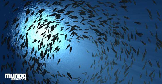 Como se descobriu o lugar mais fundo do mar?
