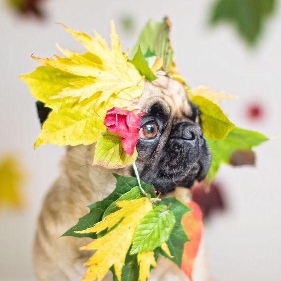 Happy Fall Sunday