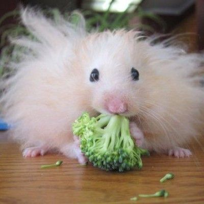 broccoli: it'll put hair on your chest!