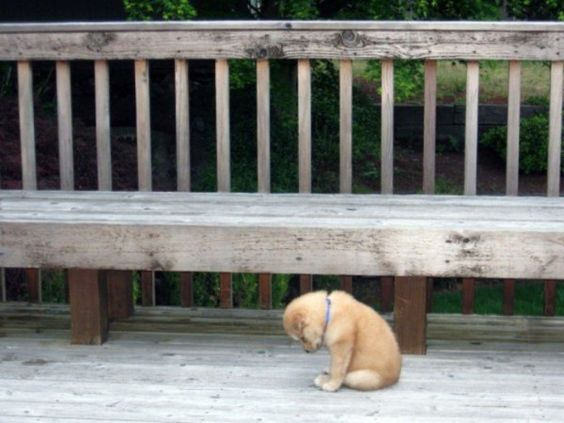 """""""none of the other puppies want to play with me..."""""""
