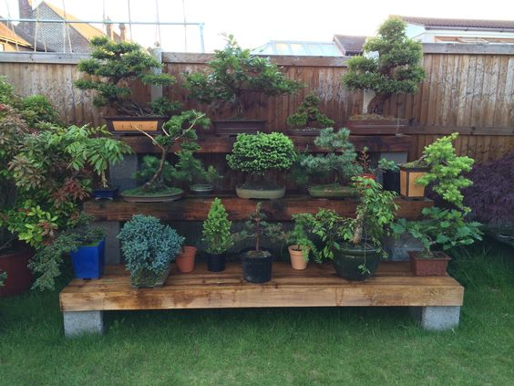 Backyard Bonsai Display : Beautiful bonsai display made by the husband Display made with hollow