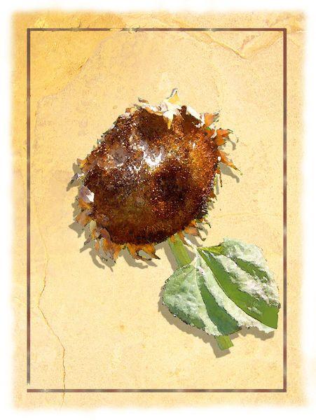 'Vogels Speiseteller' von Dirk h. Wendt bei artflakes.com als Poster oder Kunstdruck $18.03