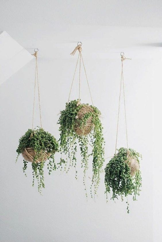hoekjes met hangplanten