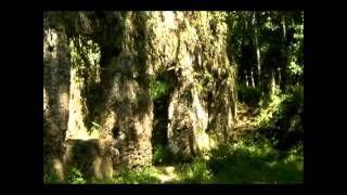 Ruínas da Lagoinha em Ubatuba. Wilson Luiz Negrini de Carvalho - YouTube #Ubatuba #Brasil #Brazil #viagem #turismo #natureza #nature #naturaleza #ruinas #monumento #preservacao