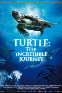 Turtle: The Incredible Journey (2009) A little loggerhead turtle follows in the path of her ancestors on one of the most extraordinary journeys in the natural world.