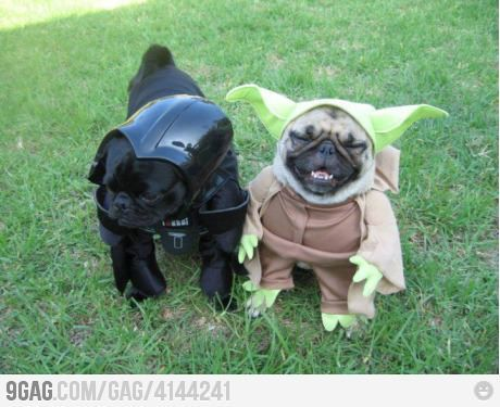 More animals in Star Wars Costumes