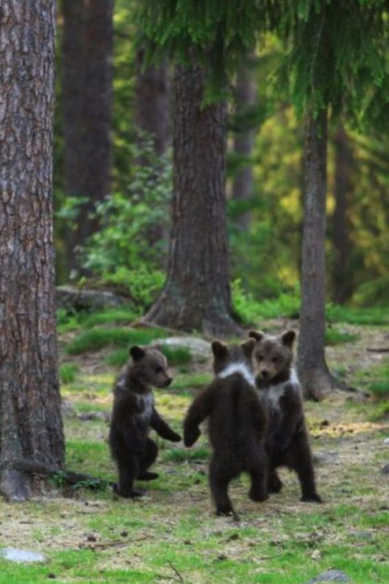 Teddy bear dance