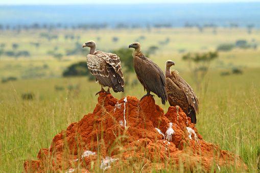 Vogelbeobachtung in Uganda
