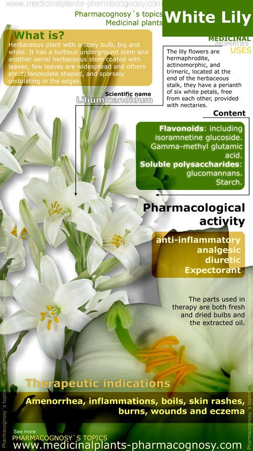 White Lily flower. Infographic. Summary of the general characteristics of the White Lily plant. Medicinal properties, benefits and uses more common.  http://www.medicinalplants-pharmacognosy.com/herbs-medicinal-plants/white-lily-flowers/benefits-infographic/