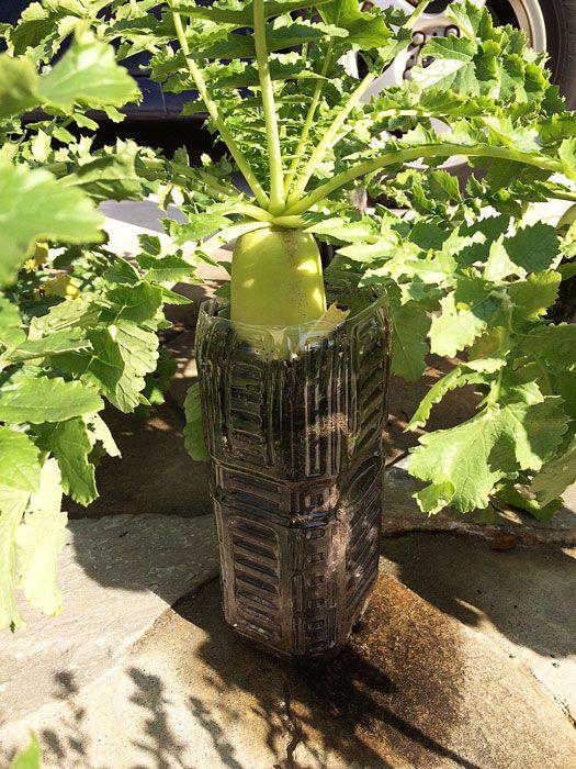 ペットボトル栽培で家庭菜園を楽しもう おすすめ商品や作り方を紹介