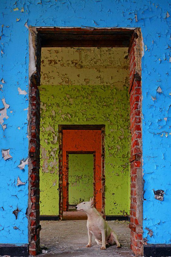 Alice van Kempen visite les endroits abandonnés dEurope avec son chien  2Tout2Rien