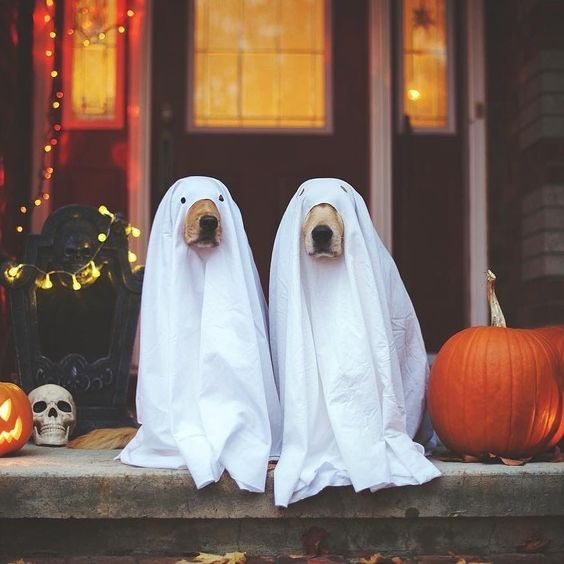 Check out our gallery of easy and cheap Halloween decorations for both an indoor and outdoor party for kids. Everything from funny adornments for the house to scary embellishments for the yard  for porch for Apartments for Fireplace are stacked up here. #halloweendecorations #indoorhalloweendecor #outdoordecorations #halloween