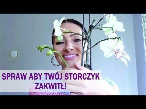 Co Robic Aby Storczyk Zakwitl Youtube Youtube Orchids Ikebana