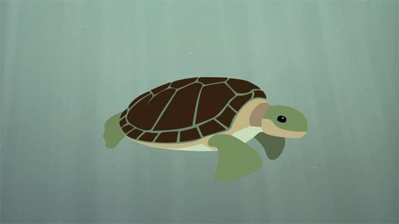 The Survival of the Sea Turtle, An Educational Animation by TED-Ed