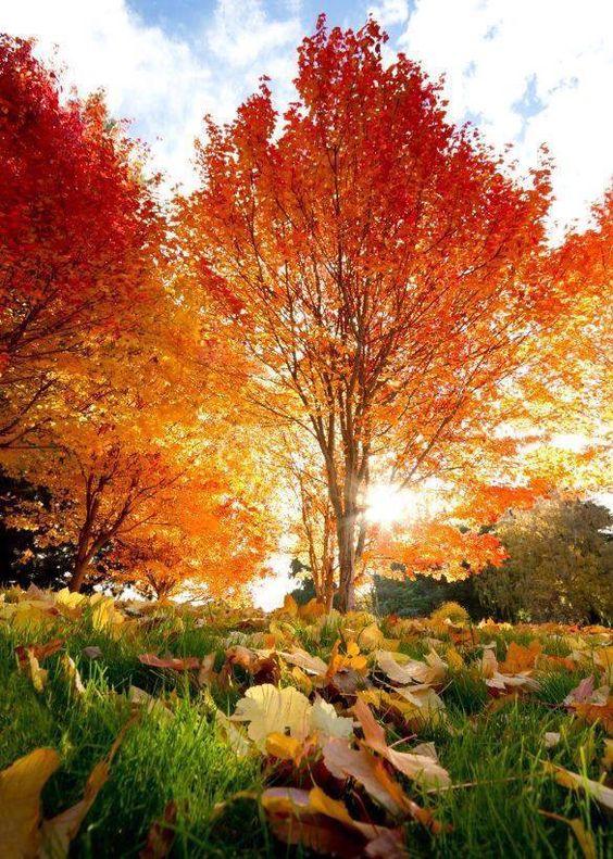 Paisajes paisajes y jardines landscapes gardens - Jardines y paisajes ...
