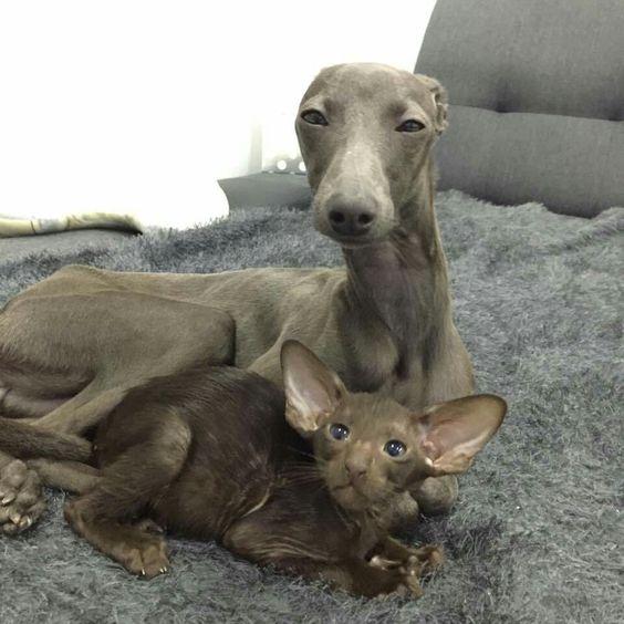 Zemira and kitty