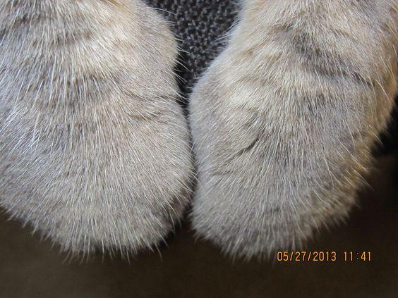 Bailey's paws