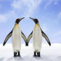 Man kann sich von Penguin erholen. Schauen Sie selbst!