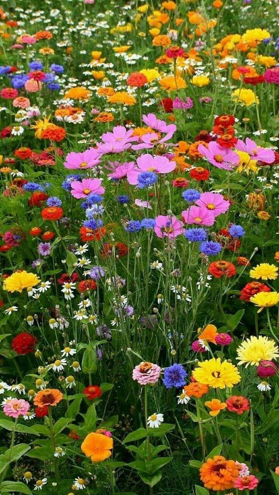 #naturefirst - Blütenteppich