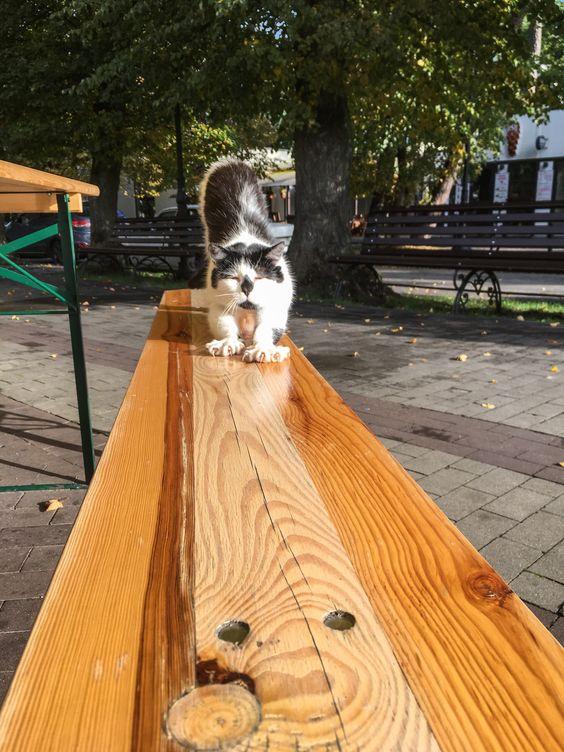 Размеренная жизнь светлогорского котика. Фото Жени Шведы