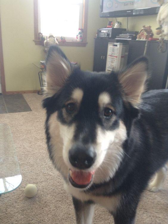 My dog, Thor