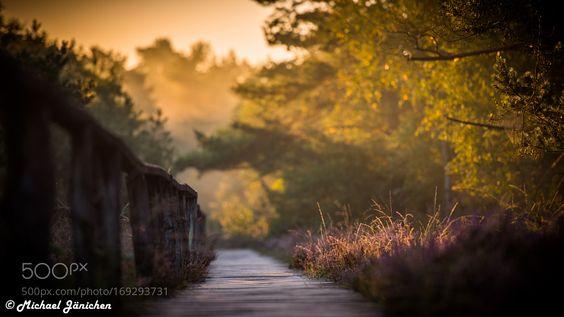 Pietzmoor Lüneburger Heide by Lux5005. @go4fotos
